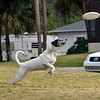 "Boscoe ""The Flying Dog"" :"