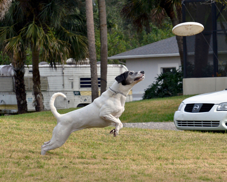 "Boscoe ""The Flying Dog"""